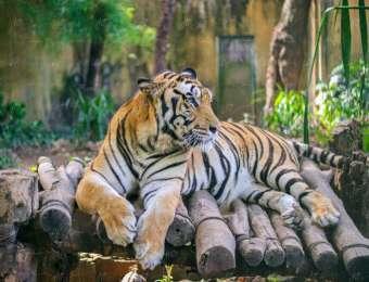 Animals (Adobe Stock)